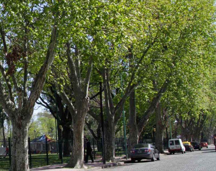árboles contra la contaminación