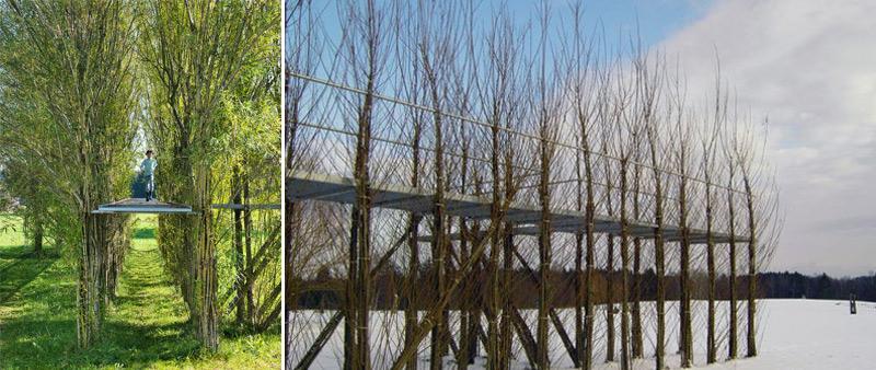 arquitectura, arquitecto, diseño, design, sostenibilidad, sostenible, ecológico, estructura, vegetal, planta, viviente, Baubotanik, Ferdinand Ludwig