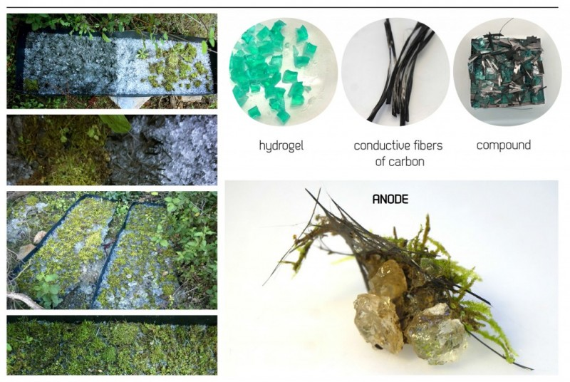 arquitectura biológica_composición del sistema