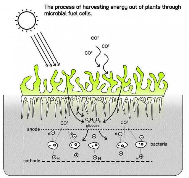 arquitectura biológica_esquema proceso