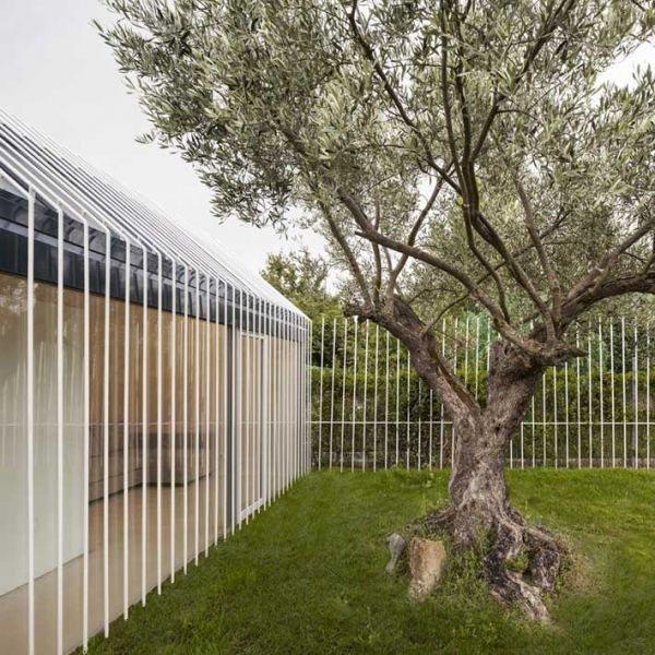arquitectura y empresa ciclo de entrevistas exclusivas taller basico casa para un hombre y un arbol 08