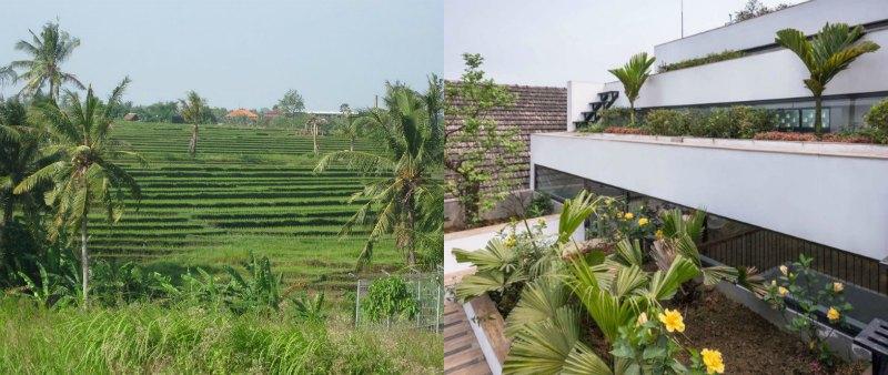 arquitectura, arquitecto, diseño, design, sostenible, sostenibilidad, rural, naturaleza, Terraces Home, Vietnam, H&P Architects, ecología, ecológico, cultivo, arroz, aterrazado