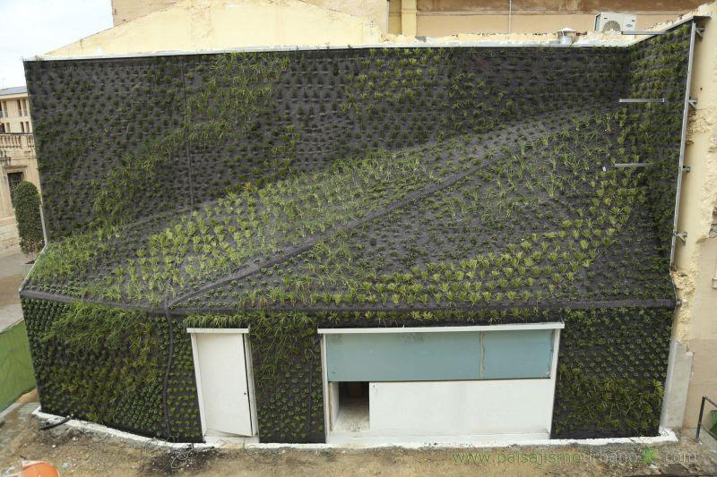 arquitectura_jardín vertical en Elche_paisajismo urbano4