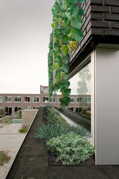 arquitectura_marc koehler architects_house garden_detalle vegetación