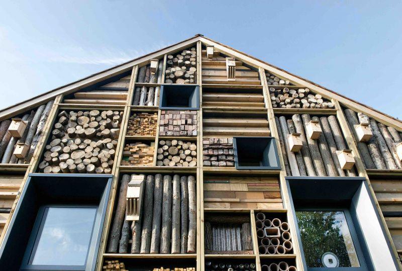 arquitectura_mellor primary school_detalle