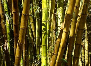 arquitectura_suelos bambu_materia prima2