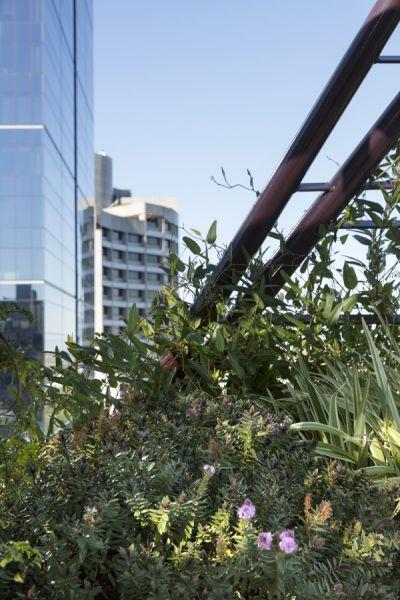 arquitectura_techo verde_Bent Architecture_zona verde