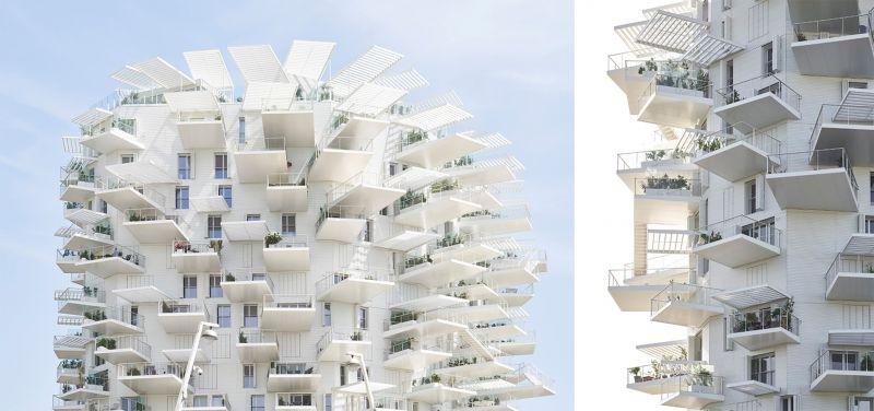 Proyecto l'arbre blanc en Montpelier