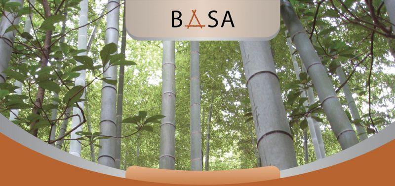 arquitectura basa estructura de acero de bambu vegetacion