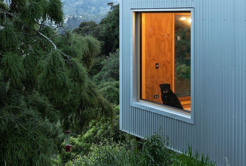 arquitectura_y_empresa_Kowhai House_entorno