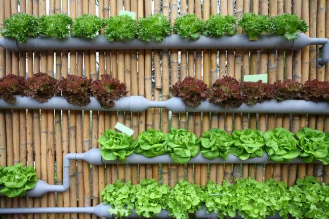 Tu propio jard n vertical en casa arquitectura - Macetas para jardin vertical ...