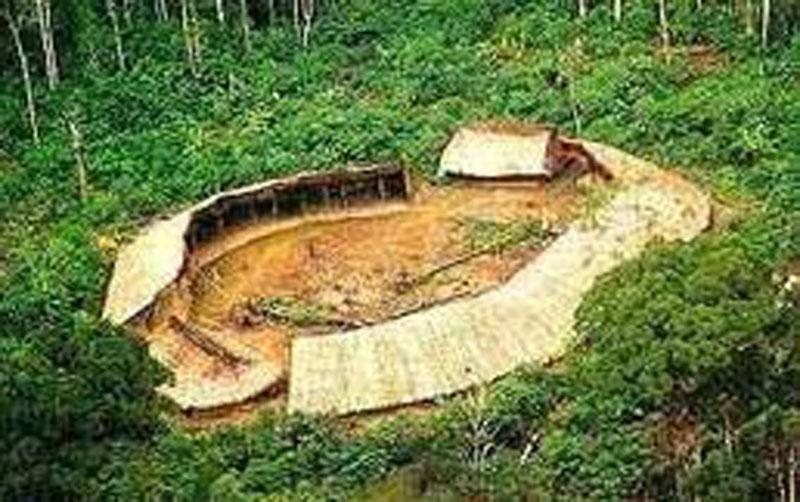 El Shapono Shabono Vivienda Colectiva De Los Yanomami