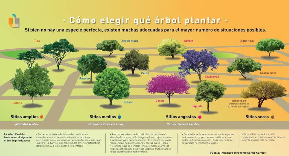 Urbanismo: Cómo elegir qué árbol plantar
