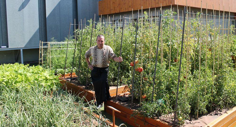 El fenómeno Urban Farming, algo más que arquitectura verde: un huerto en la azotea.