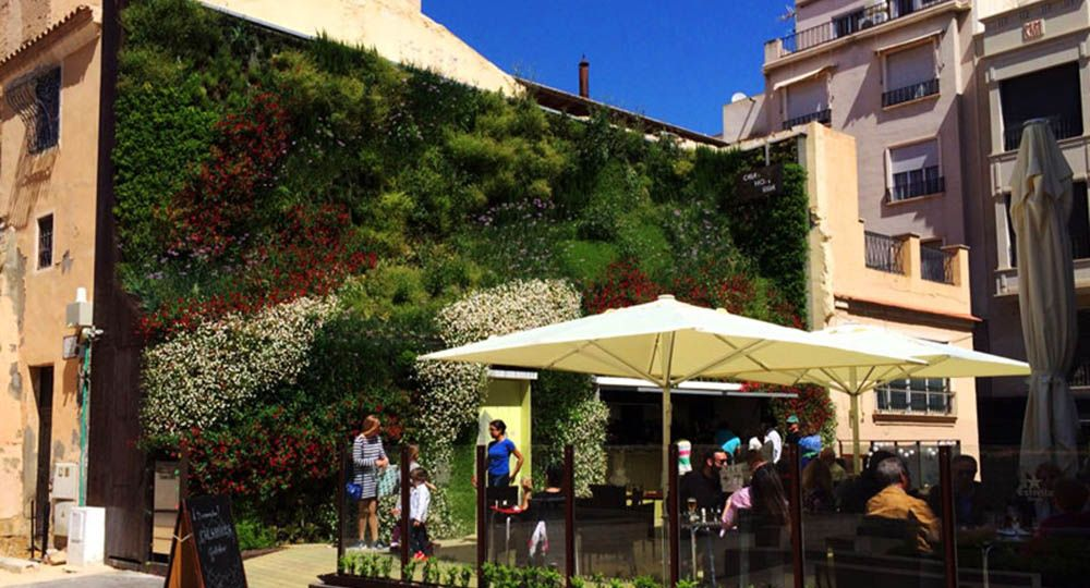 Cafetería en un jardín vertical en Elche. Antonio Maciá Arquitectos.