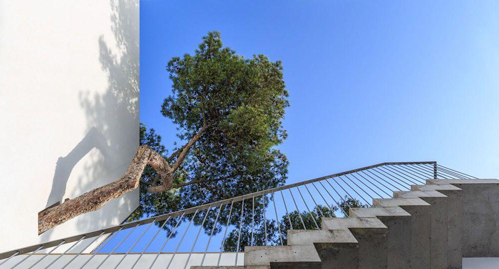 Un poema construido entre árboles: Recordando al arquitecto Antonio Jiménez Torrecillas