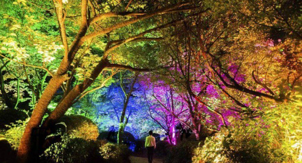 A Forest Where Gods Live. Diseño, arte y luz del paisaje natural por TeamLab