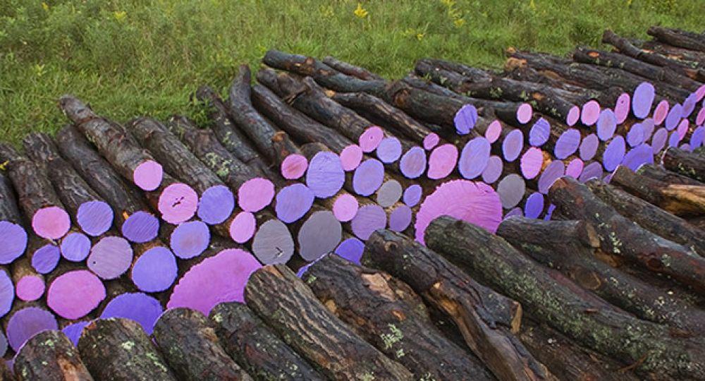 El camino de los registros del púrpura. El paisaje por Michael McGillis