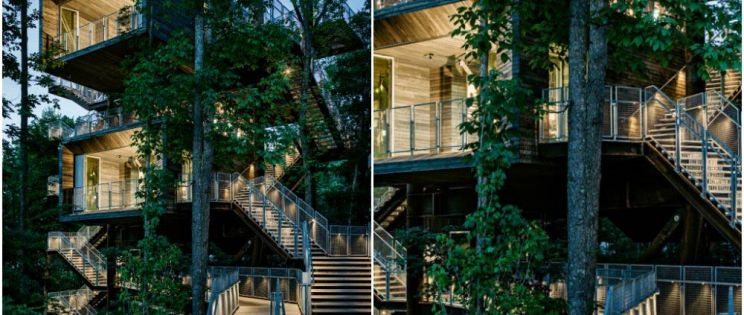 Arquitectura verde. Una casa en el árbol por y para la naturaleza