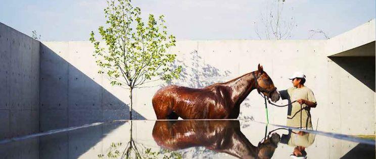 Establos Figueras Polo, por Estudio Ramos Arquitectura