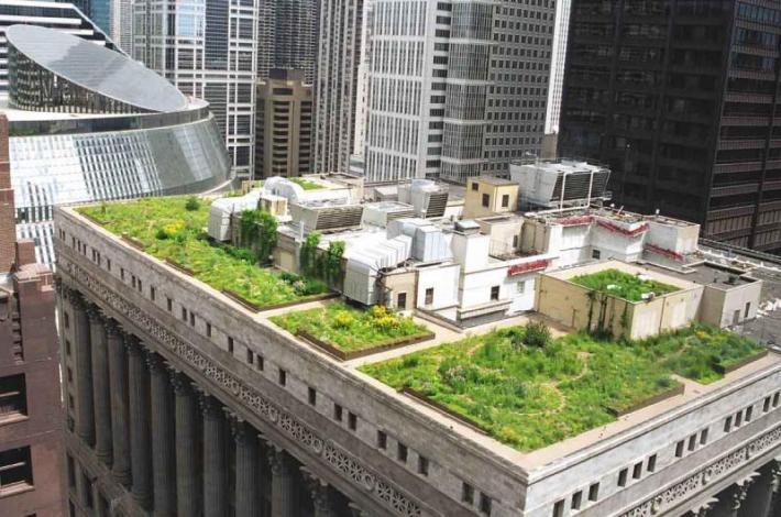 Techo verde Chicago